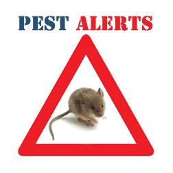 Pest Alert - MICE! - Contact Pesky Critters Pest Control